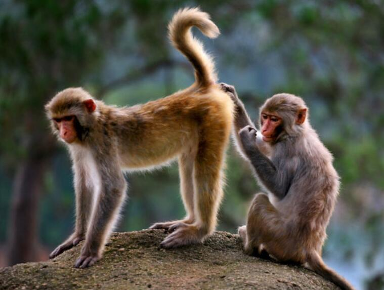吉吉人与动物色情网_属猴人如何做好事业_属猴人获得事业成功的条件_吉吉