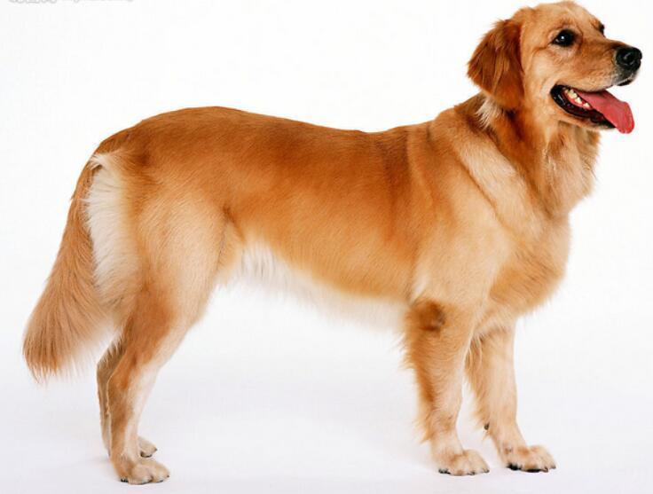 吉吉人与动物色情网_属狗的如何与同事相处_属狗人与同事的相处之道_吉吉